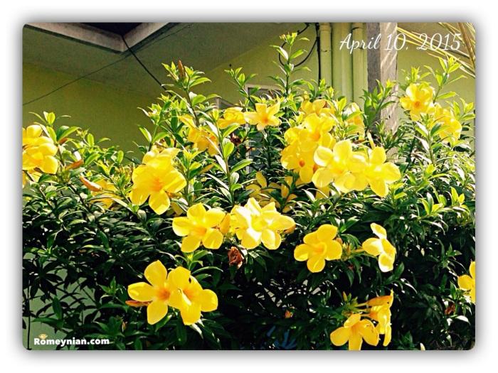 Yellow  Flowers - Bts001